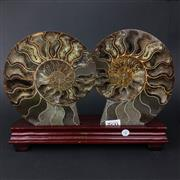 Sale 8567 - Lot 652 - Cleonocearas Ammonite Pair on wooden stand (Jurassic Period), Morocco