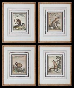 Sale 9126 - Lot 1132 - Set of Four 19th Century French Coloured Engravings, of monkeys, titled below, engraved by De Seve & in contemporary gilt frames (45...