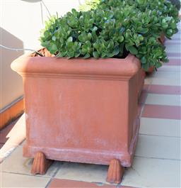 Sale 9165H - Lot 20 - Pair of square form terracotta planters with jade plant succulents. Height 48cm x Width 58cm x Depth 58cm