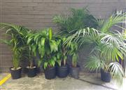 Sale 8959 - Lot 1074 - Collection of Indoor Plants