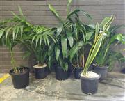 Sale 8959 - Lot 1073 - Collection of Indoor Plants